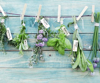herbs hanging on a wall