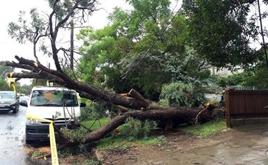 The NSW storm: what caused it and what you have to do