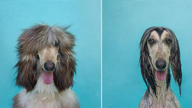 Dry Dog Wet Dog: Photographer's portraits of dogs before and after bath time