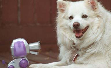 Robot dogs to replace real dogs by 2025