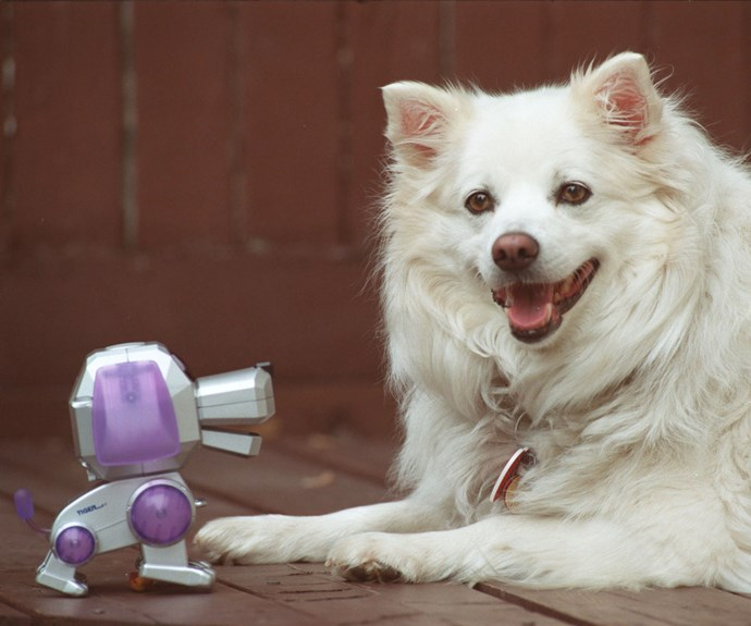 A robotic dog with its flesh-and-blood counterpart.