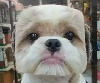 Cute or creepy? Pet owners are shaving puppy faces into cubes