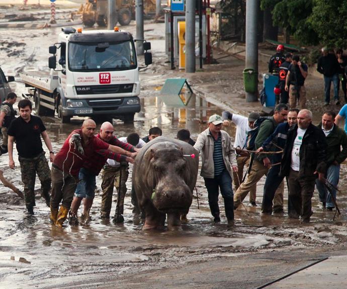 Escaped zoo animals roam city streets