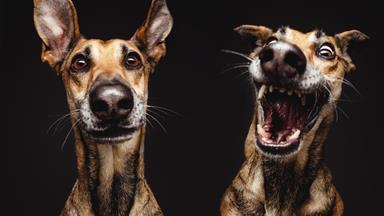 Rescue dogs strike a pose
