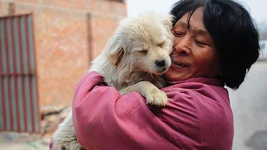 Retired Chinese school teacher rescues 500 dogs from being eaten at Yulin Dog Meat Festival