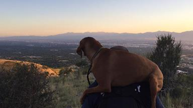 Hero firefighter carries injured dog down mountain