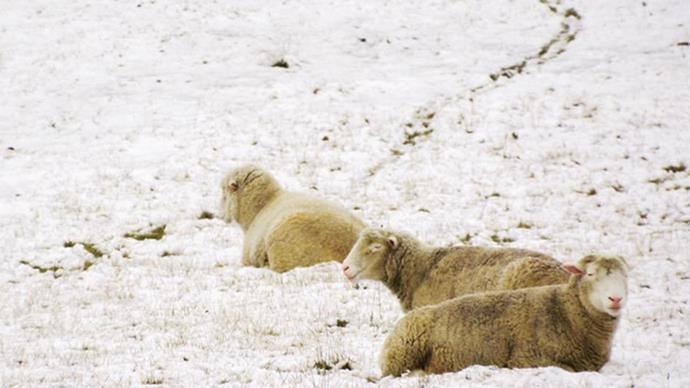 Australia shivers in record big freeze
