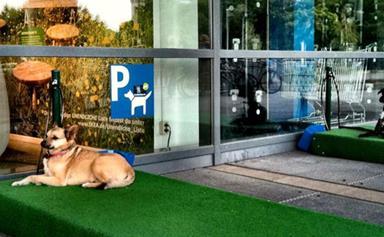 IKEA introduces dog parking spots