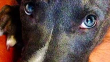 Heartwarming: moment a stolen dog is reunited with owner