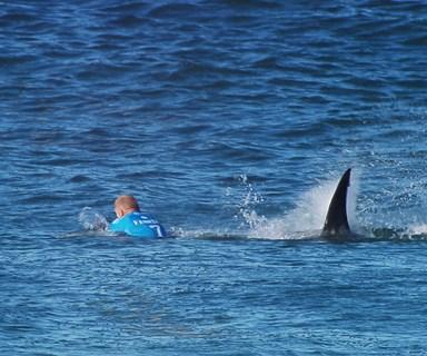 Aussie surfers seek shark cull