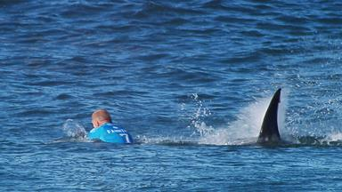 Aussie surfers seek shark cull
