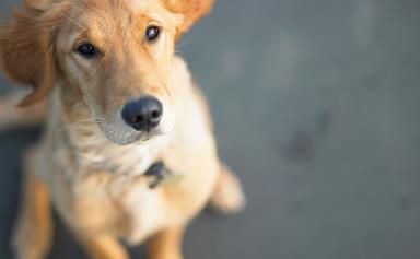 Dog foils prison break plot