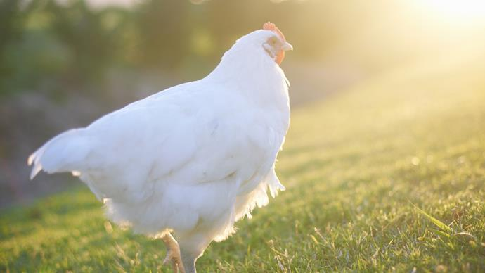 McDonald's to switch to only cage-free eggs in US by 2025