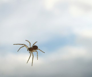 Spiders are taking over Memphis, Tennessee