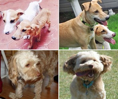 Heartwarming before and after images of adopted dogs