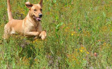 Introducing Doggy Heaven, where rescued dogs get to play everyday