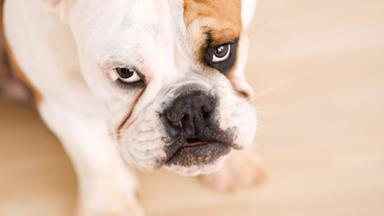 10 things every dog lover needs to know