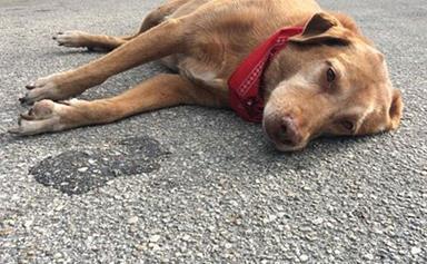 Loyal dog keeps vigil on road where owner was killed