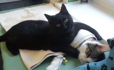 Cat nurses other animals back to life