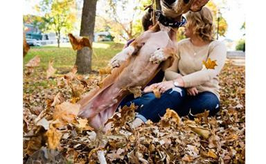 Meet Louie, the photo bombing dachshund