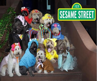 Dogs in adorable Halloween costumes