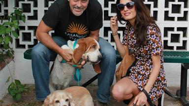 George and Amal Clooney add a pup to their growing family