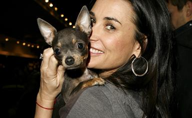 Inside Demi Moore's weekly $1,970 acupuncture treatments ... for her dog