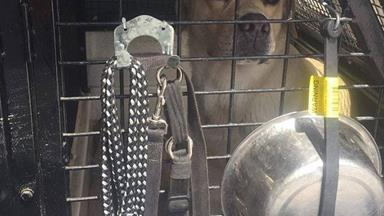 Police dogs left in hot car in NSW