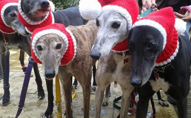 A woman is knitting Christmas jumpers for homeless greyhounds