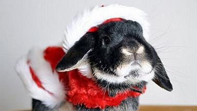 10 of the cutest animals in Christmas outfits