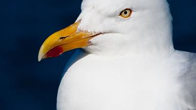 The seagull story that's gone viral