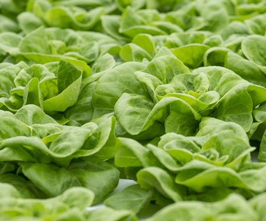 Lettuce recall: Salmonella outbreak linked to Coles and Woolies