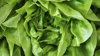 Huge spider filmed crawling inside bag of Woolworths salad mix