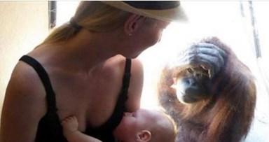 Breastfeeding mother amazed by orangutans reaction