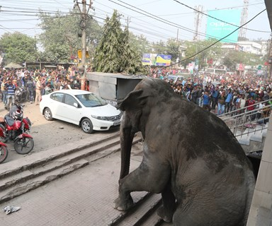 IN PICTURES: Wild elephant goes on terrifying rampage in India
