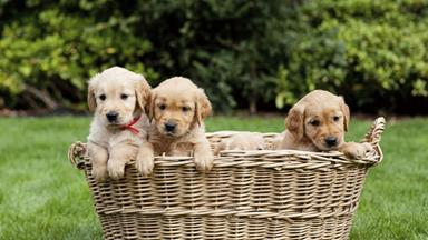 You can have puppies delivered to your office today