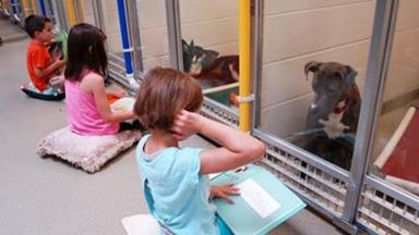Children read to shelter dogs to keep them calm