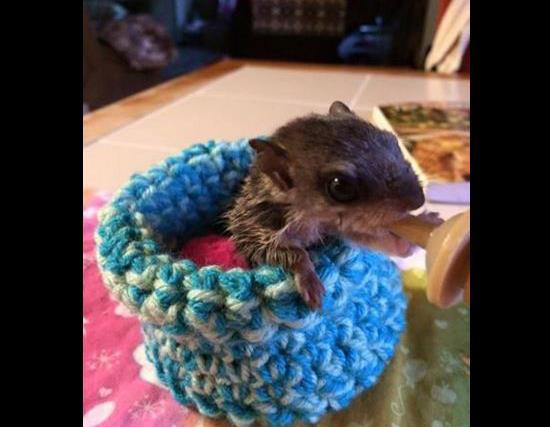 Knitters needed for rescue animals