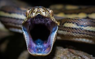 Everything you need to know about snakes