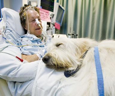 Hospital lets dogs visit patients