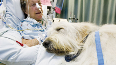 Hospital lets dogs visit patients