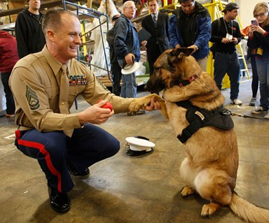 Dog that lost limb in Afghanistan gets highest military honour