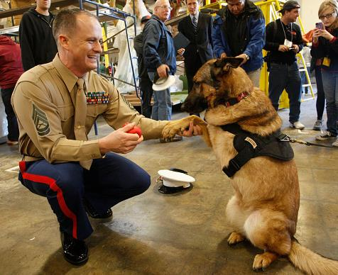 Lucca the Marine Corps dog