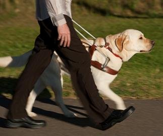 Why you should never pat a guide dog