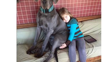 The world's biggest dogs