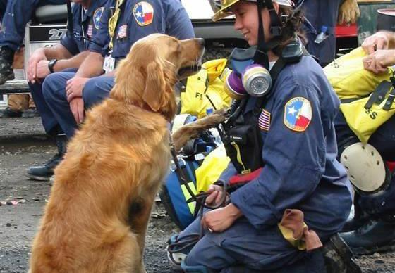 Guard of honour given to final 9/11 service dog