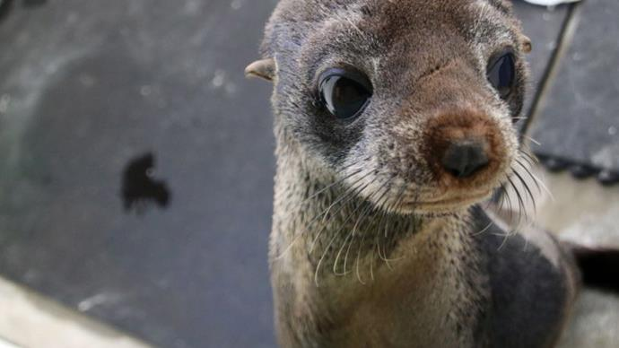 Rescued seal returns to wild after Sydney storm