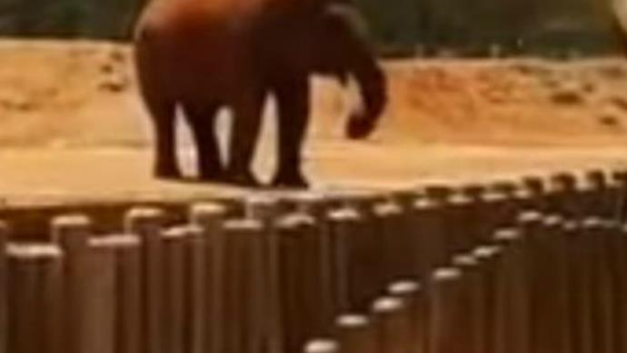Girl dies, 7, after elephant throws stone at her at zoo