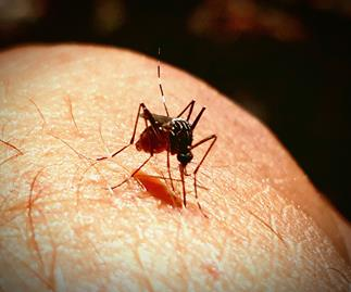 Fears over mosquitos and possums spreading flesh-eating bacteria through Melbourne