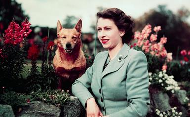 The Queen loses one of her beloved corgis